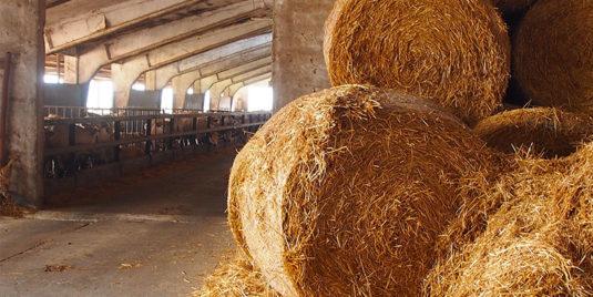 carne-bovina-alimentata-a-fieno-filiera-pantano